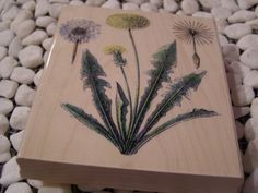 Dandelions Penny Black wood mounted Rubber Stamp