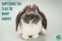 House Rabbit Society, Happy Fathers Day, Special Day, Bunny, Animals, Thoughts, Happy Valentines Day Dad, Cute Bunny, Animales