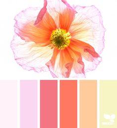 Colour Pallette, Color Palate, Colour Schemes, Color Combos, Color Patterns, Design Seeds, Color Concept, Flora Design, Theme Color