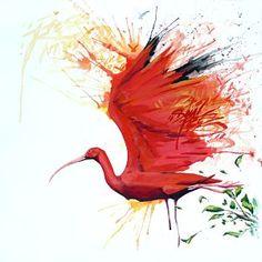 Ibis by Joshua Durant
