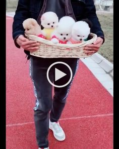 a man with basket has a lot of puppies - Man, fashion clothes, fashion shoes, with basket, puppy Funny Cats And Dogs, Cats And Kittens, Cute Cats, Funny Pets, Funny Humor, Kittens Cutest, Funny Stuff, Cute Baby Animals, Animals And Pets