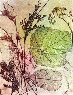 Australian Printmaking artist Jet James and his recent artwork. Botanical Drawings, Botanical Art, Linocut Prints, Art Prints, Block Prints, Drypoint Etching, Nature Artists, Art Nature, Etching Prints