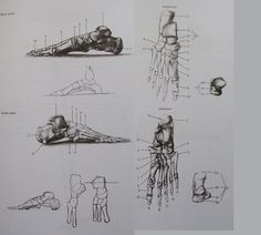 42 best Anatomy images on Pinterest   Anatomy study, Drawings and ...