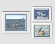 Shorebird Prints. Wall Decor. Fine Art Photography Ready for Frames. Pelicans. Sea Gulls. Den or Office Wall Grouping. FREE shipping in US. by VintageArtForLiving on Etsy https://www.etsy.com/listing/512690938/shorebird-prints-wall-decor-fine-art