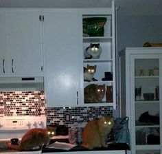 Why You Should Never Go Into The Kitchen At Night! http://techmash.co.uk/2014/02/17/why-you-should-never-go-into-the-kitchen-at-night/