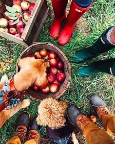 Picking apples at the farm orchard. Apple picking in the fall. Fall inspiration and photo ideas. Things to do during fall. Fall Inspiration, Writing Inspiration, Happy Fall Y'all, Autumn Photography, Vsco Photography, Hello Autumn, Fall Photos, Fall Season, Apple Season
