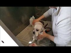 Canis-Styling: Honden -& katten trimsalon