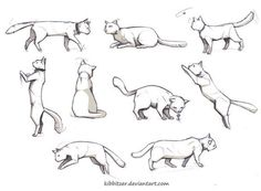 Cat reference by Kibbitzer on deviantART | Drawing References and Resources | Scoop.it