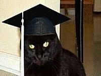 Cat earns life experience online degrees #onlinedegrees