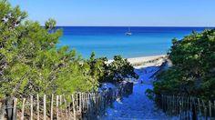 Corsica - Plages de Haute Corse - La plage de Saleccia (Saint Florent Haute Corse) est située dans le désert des Agriates - Aux alentours : Plage de l'Ostriconi, Plage du Lodo