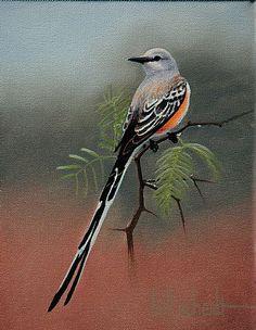 Scissortail and mistletoe.. Oklahoma state bird and flower ...