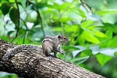 Kostenloses Bild auf Pixabay - Tier, Tierwelt, Eichhörnchen, Natur