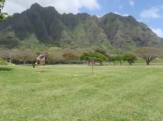 Of course we would have to check out the disc golf scene http://hdga.shutterfly.com/158 #pinhawaii