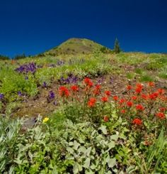 Iron Mountain Hike | Travel Oregon