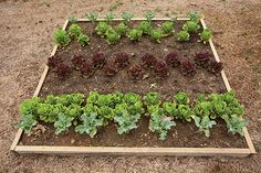 P. Allen Smith: How to Grow Your Own Groceries In a Small Space
