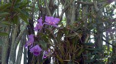 Flores em nosso jardim