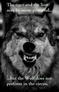wolf sprüche weisheiten Die 431 besten Bilder von Wölfe (Sprüche) | Nice quotes, Wolves  wolf sprüche weisheiten