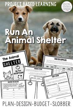 The Animal Shelter i
