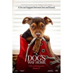 A Dog's Way Home hela filmer på nätet – dreamfilm ! Get Movies, Home Movies, Movies And Tv Shows, New Movie Posters, Original Movie Posters, A Dogs Purpose, Movie 21, English Play, Dog Books