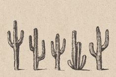 Ad: Big cacti bundle, sketch style by Bakani on Product includes: - 7 sets of hand drawn cacti AI, EPS (you can easily change color or scale it to any size you need) - 59 single hand drawn Western Tattoos, Cactus Tattoo, Cactus Drawing, Doodle Designs, Environment Concept Art, Seamless Background, Paper Texture, Graphic Illustration, Illustrations