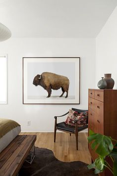 Love the buffalo picture!