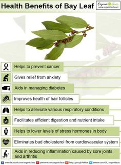 Some of the most impressive health benefits of bay leaves include their ability . - Some of the most impressive health benefits of bay leaves include their ability to detoxify the bod - Lemon Benefits, Coconut Health Benefits, Bay Leaf Tea Benefits, Nettle Leaf Benefits, Cloves Benefits, Stomach Ulcers, Types Of Tea, Natural Antibiotics, Hair Health
