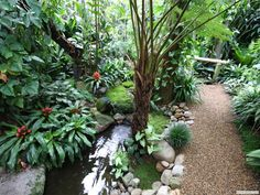 Beautiful broms and path and water feature