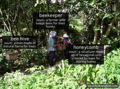 Beekeeper - www.funkyenglish.com
