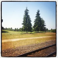 Kimi posted this photo to her blog, Where in the World is Kimi? She's spotted here, on our Amtrak train, heading to Seattle! Thanks for sharing!