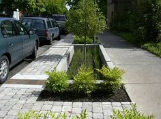 CSTNE Project: Traffic Calming & Green Streetscape Elements