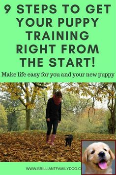 House Training A Puppy In Apartment And Dog Behavior Dominance