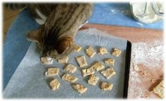 Marc Andre, Husky, Animals, Dog Biscuit Recipes, Dog Biscuits, Whole Wheat Flour, Cat Grass, Little Kitty, Dog Cat