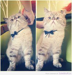 Instagram's latest kitty. Captain Pancakes.
