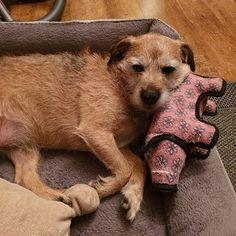 Everybody needs a piggy for a pillow everyone needs a piggy!