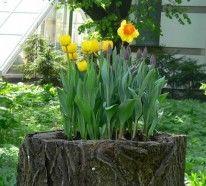 Einen originellen Pflanztopf aus Baumstumpf selber machen