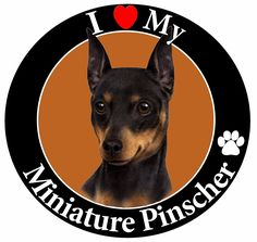 'I Love My Miniature Pinscher' Car Magnet With Realistic Looking Miniature Pinscher Photograph In The Center Covered In High Quality UV Gloss For Weather and Fading Protection Circle Shaped Magnet Measures 5.25 Inches Diameter * Read more at the image link. (This is an affiliate link and I receive a commission for the sales)