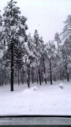 Pine-top, Arizona.