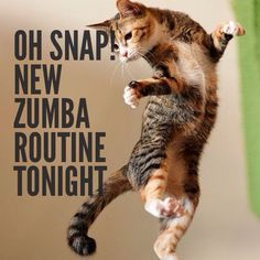 Love new music nights at Zumba