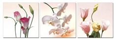 Bloom. Contemporary Art, Modern Wall Decor, 3 Panel Wood Mounted Giclee Canvas Print, Ready to Hang A1144 $69.99 (save $99.01)