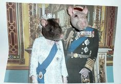 .royal ratties !