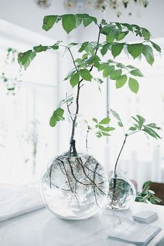 Ein Garten ganz ohne Blumenerde dank Hydroponik Hidropónico & Plantas en agua y vidrio & Pflanzenfreude.de The post Un jardín sin macetas gracias a la hidroponía. appeared first on Munceyn. Vases En Verre Transparent, Plantas Indoor, Round Glass Vase, Glass Jars, Glass Vessel, Glass Bowls, Glass Containers, Deco Nature, Best Indoor Plants