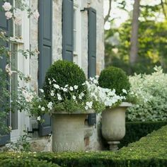 Garden Design Ideas & Inspiration : We're loving this lush, green garden. This is the perfect garden idea for your terraced house. Formal Gardens, Outdoor Gardens, Indoor Outdoor, Garden Urns, Boxwood Garden, Garden Boxes, Flowers Garden, Boxwood Planters, Brick Planter