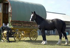 This is a antique Gypsy bowtop wagon imported from England by WR Ranch. Gypsy Caravan, Gypsy Wagon, Bohemian Gypsy, Gypsy Style, Bohemian Lifestyle, Horse Wagon, Gypsy Home, Old Wagons, Gypsy Living