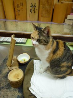 Momoko, the poster cat of the Kamakura-bori shop in Shuzenji, Shizuoka prefecture, Japan. When the shopkeeper calls her name, she answers everytime! :) Sooooo cute!
