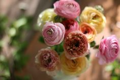 """is it possible to have too many ranunculus?"""