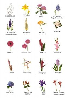 Religious Magic And Spiritual Ability Element One Nombre De Flores Ms Summer Flowers, Love Flowers, Diy Flowers, Beautiful Flowers, Flower Chart, Flower Meanings, Language Of Flowers, Japanese Flowers, Seasonal Flowers