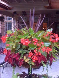 Shade container - cordyline, dragonwing begonia, coleus, and creeping jenny Container Flowers, Flower Garden, Plants, Ornamental Grasses, Beautiful Flowers, Flowers, Shade Plants, Container Gardening, Container Gardening Vegetables
