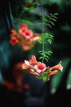 life by the drop Beautiful Flowers Images, Beautiful Flowers Wallpapers, Beautiful Nature Wallpaper, Flower Images, Flower Pictures, Amazing Flowers, Beautiful Roses, Nature Pictures, Pretty Flowers