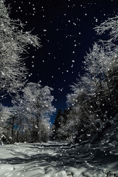 Evening Snow-this is cool since I never get to see snow