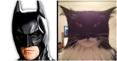 20 Cats Who Bear A Striking Resemblance To Something Else